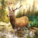 Hunting Clash Mod Apk